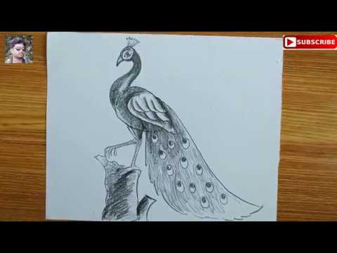 How To Draw A Peacock Step By Step Easy Peacock Drawing For Kids How To Draw A Peacock By Pencil Youtube