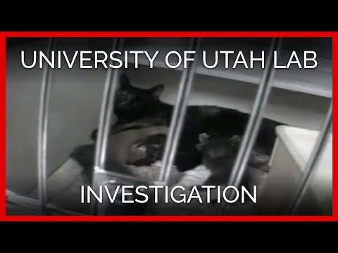 University of Utah Lab Undercover Investigation