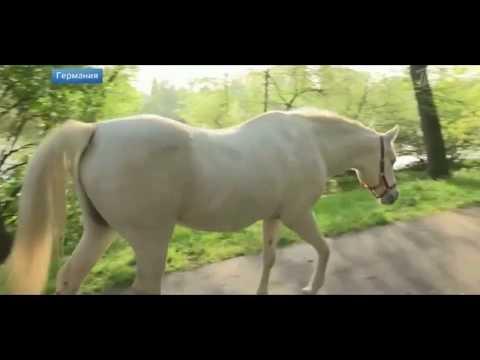 Лошадь гулящая сама по себе. Германия. 02.05.2019