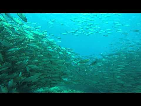 Swimming with school of fish