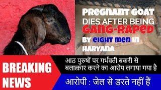Wild Men! Pregnant Goat gang-raped by 8 people in Mewat Haryana got dead.
