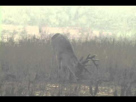 Super Heavy 16-Point Buck! Hunting Mexico - Rancho Alto Bonito