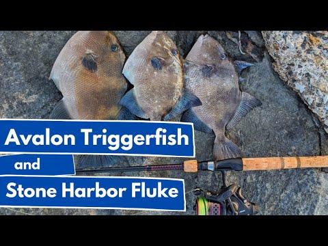 Avalon Triggerfish And Stone Harbor Fluke
