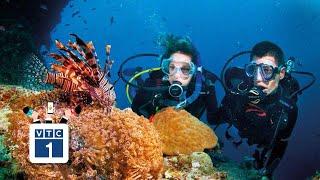 Rạng san hô ở Phú Yên đang bị hủy hoại