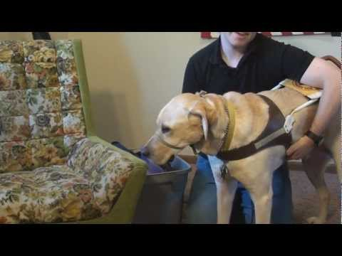Guide Dog Equipment-The Guide Dog Lifestyle By LS