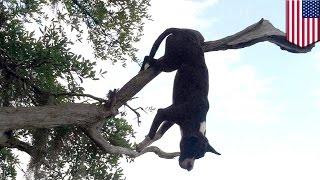 米サウスカロライナ州で、犬が木の枝に突き刺さっているのが発見された...