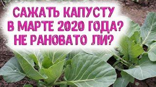 Сажать капусту в марте 2020 года? Не рановато ли? Астропрогноз для дачников и огородников на март
