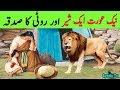 Ghareeb Aurat , Sher aur Ek Roti ka Sadqa || Poor Woman , Bread And Lion || Sadqa Dena Kaisa hai