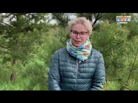 ТНТ-Поиск: Прогноз погоды на неделю