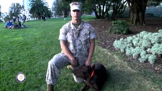 """2014 Sffw - """"bark In The Park"""" - K9 Heroes"""