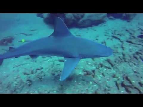 Niihau Third Dive