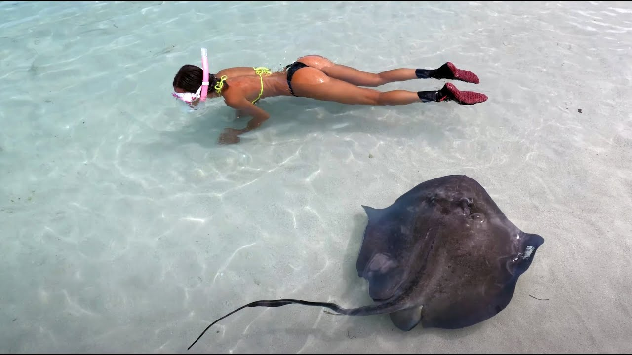 Swimming with SHARKS & Stingrays in the BAHAMAS