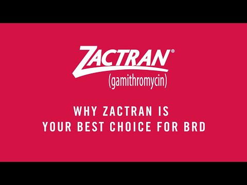 Why Zactran® (gamithromycin) Is Your Best Choice for BRD