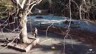 Girl Scout Tree Climb December 2018