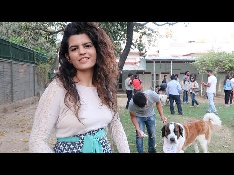 Best Dog Party in Delhi .. | Priyanka Nijhawan