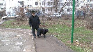 Незрячего жителя Волжского почти полвека ведут по жизни собаки-поводыри