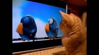 Смешные приколы про кошек виртуальные птички
