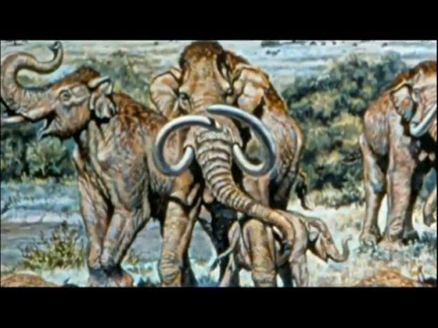 THE EVOLUTION OF SIZE - NOVA DOCUMENTARY - History Discovery Life (full length documentary)