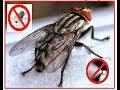 3 Cara Mengusir Lalat Dengan Cepat dan Mudah