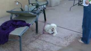 Pheobie the teenage dog episode 2 thumbnail