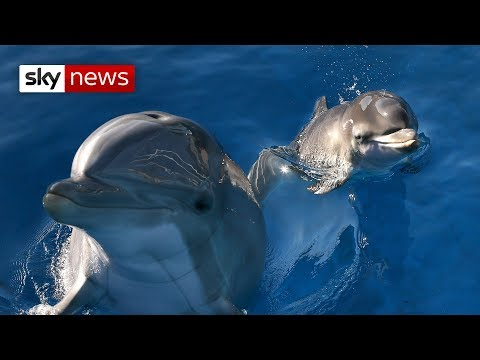 the-danger-of-swimming-with-dolphins