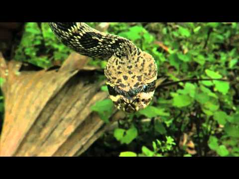 Manny Puig gets personal with a rattlesnake on Savage Wild!