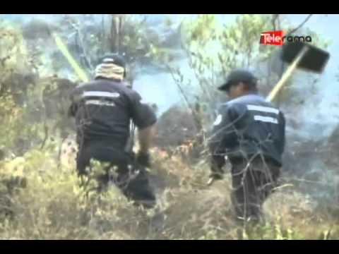 260 hectáreas de vegetación quemadas en lo que va del año