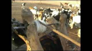 Village du Sahara (NIGER)