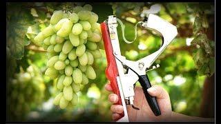 Обзор супер инструмента для сада. Тапенер или степлер для подвязки винограда и  садовых растений.