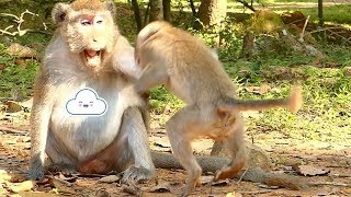 Janet Monkey Hungry Got Slapping By Jane Mother | Janet Screaming | Monkey Crying