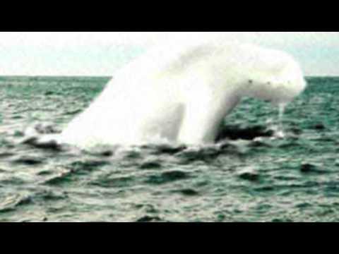 ТОП 5 Загадочных Морских Существ Снятых На Камеру