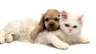 Шок! Любовь кота и собаки!