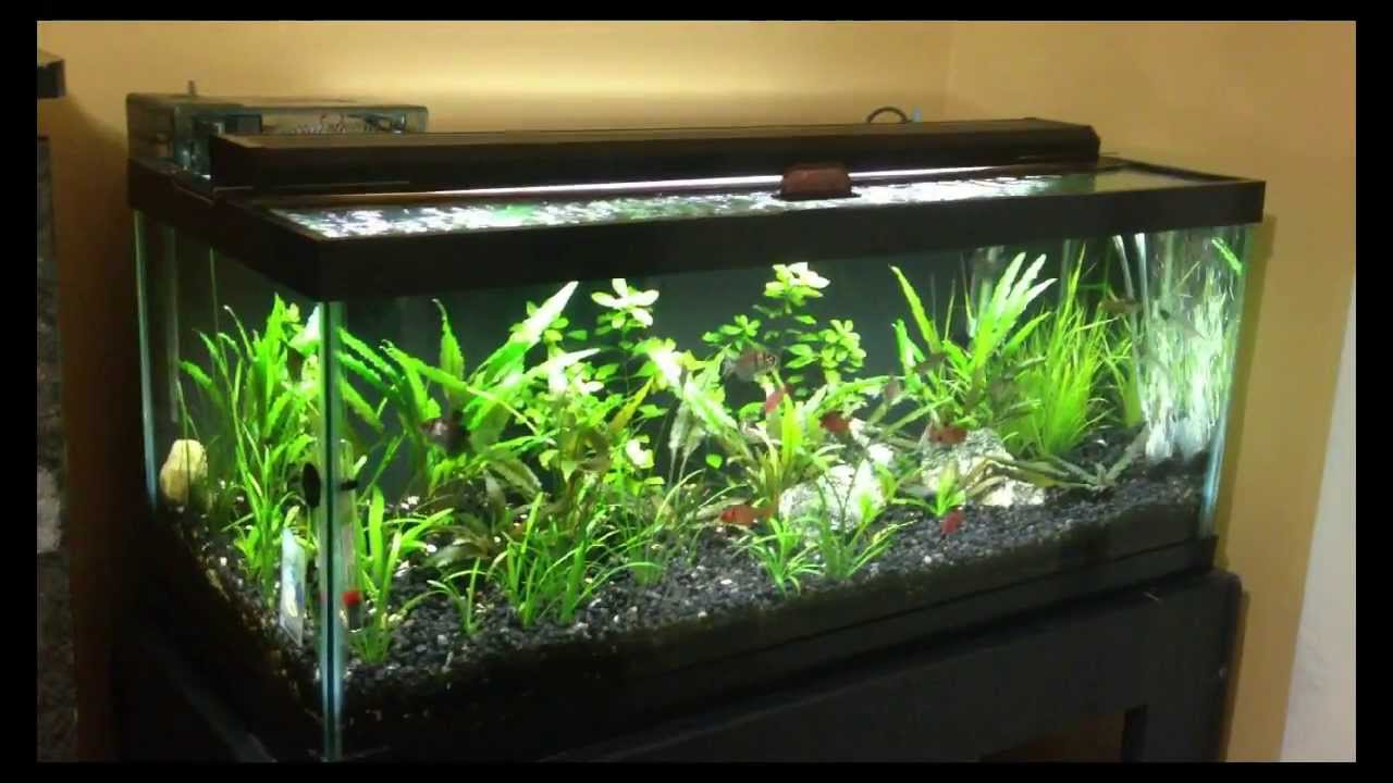 20 gallon long planted tank one year after youtube for 20 gallon fish tank lid