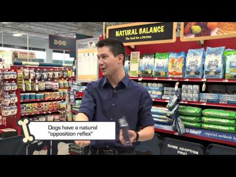 sean-dowling-with-petco-dog-training-tips