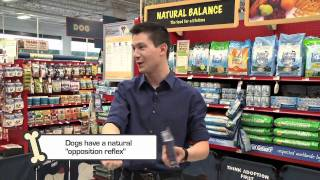 Sean Dowling With Petco Dog Training Tips