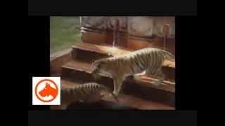 Śmieszne zwierzęta Funny animals Żartownisie XD