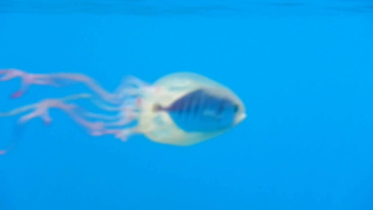 U Wish Jellyfish Fish Commandeer...