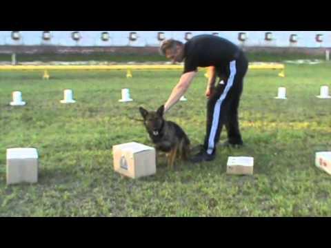Detection Dog Training VITO K - 9 №19