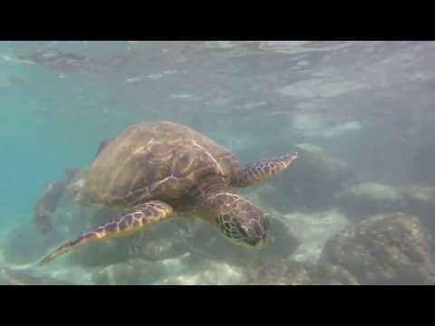 Go Pro  Maui Hawaii Travel Video