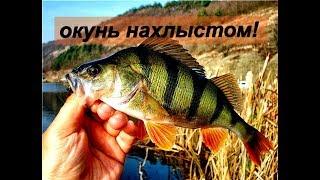 НАХЛЫСТ - ОКУНЬ - СУПЕР КЛЁВ!!! Мушка - Малёк.