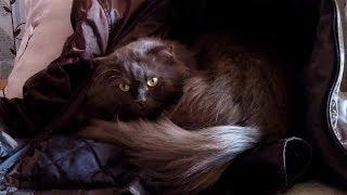 коты любят спать в куртках, там тепло
