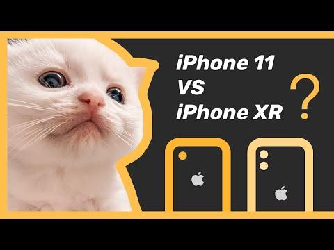 Cute Kitten Show - iPhone 11 vs iPhone XR Video Camera Comparison