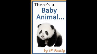 There's a Baby Animal... 🐼