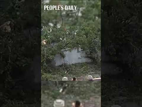 Huge old tree collapsed, almost crushing down on a passer-by and her kid