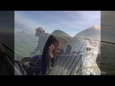 Winter Nuclear Plant Lake Hybrid Striped Bass / Kansas USA