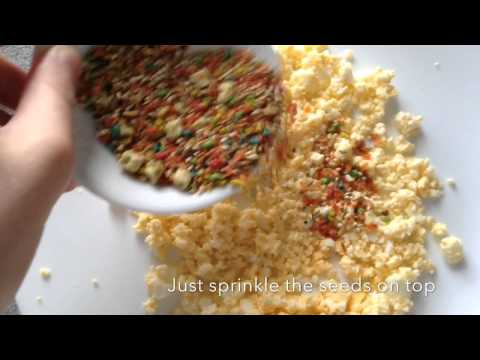 DIY How To Make Budgie Egg food / For All Birds