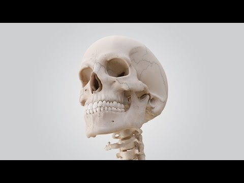 See the Human Skull in 360°