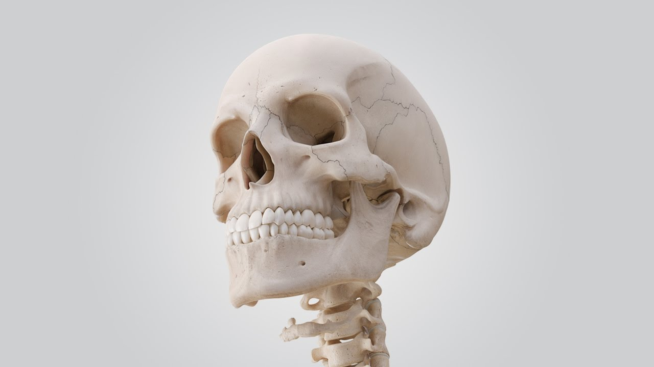 See The Human Skull In 360 Youtube