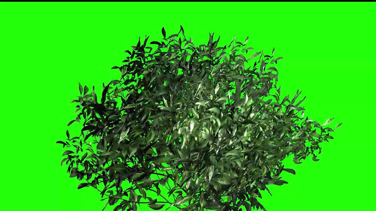 plants green screen best tree green screen footage