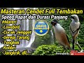 Masteran Burung Cendet Full Tembakan  Mp3 - Mp4 Download